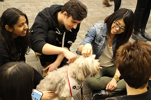 2 girls a guy petting a small, long haired dog.