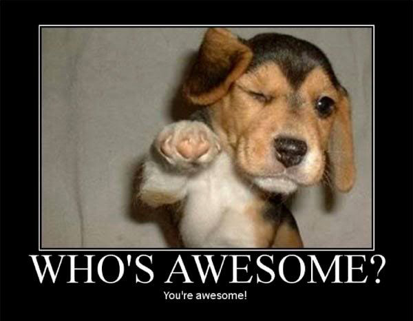"Dog pointing at you with the caption ""who's awesome? you're awesome!"""