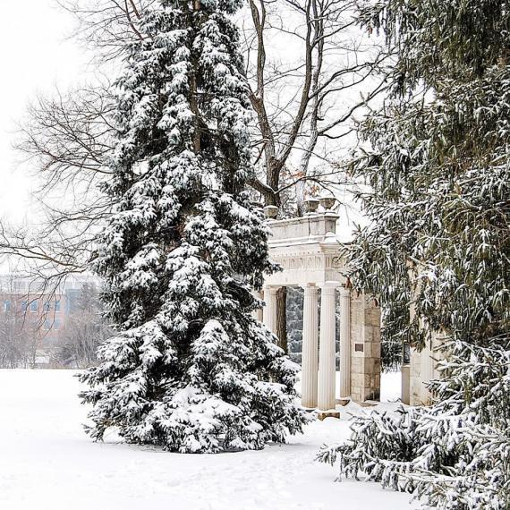 snowy UoG