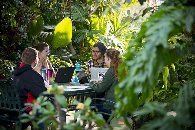 Students studying amid a rainforest setting