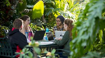 Four students study in a lush green paradise within a U of G greenhouse